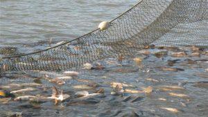 novi osnovi za stopanisuvanje so ribite vo rekite i ezerata