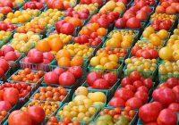 Во храната многумина гледаат шанса за свој бизнис