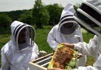Пчеларството- хоби или бизнис?