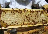 Како до повеќе мед?