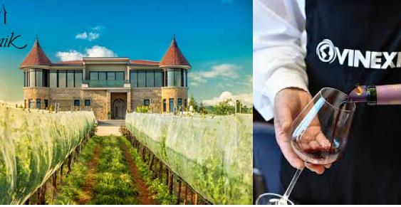 Вината Камник меѓу најдобрите на светски вински настани