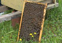 Пролетниот мраз ги намали приносите на мед во Кочанско