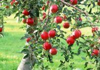 Почнува исплатата на субвенциите за овоштарите и лозарите
