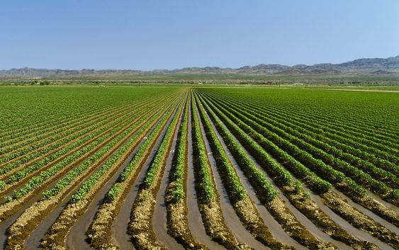 Расцепканоста на македонското земјоделство- проблем за производството