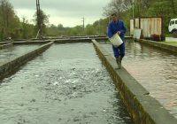 Македонија наскоро на европски пазар со рибни производи
