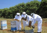 Пчелари од Делчево и Благоевград ќе формираат здружение