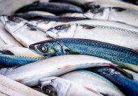 Македонски рибни производи на европскиот пазар