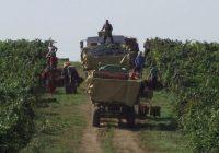 Платена првата рата за винското грозје