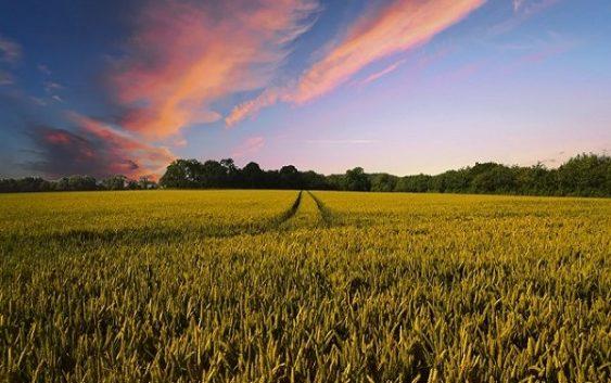 Кина купува земјоделско земјиште ширум светот