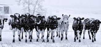 АХВ дава препораки за одгледувачите на животни во услови на снег и ниски температури
