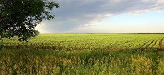 Земјоделците малку ги осигуруваат посевите