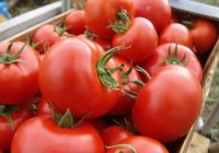 Интервентна субвенција од 4 денари за предадени домати кај преработувачите