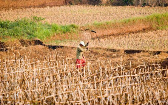 Земјоделците предлагаат решенија за проблемите со пласманот и штетите од климатските промени