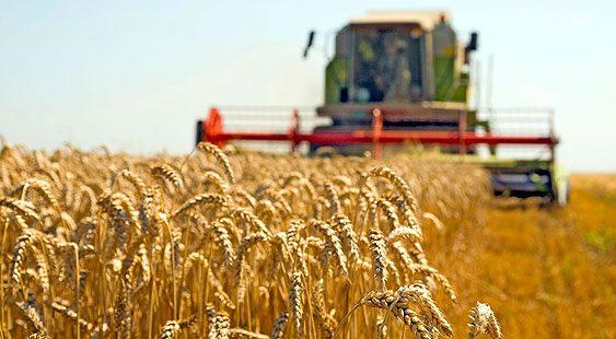 Асоцијацијата на земјоделци се согласува дека производствената цена на пченицата е 9,14 денари за килограм