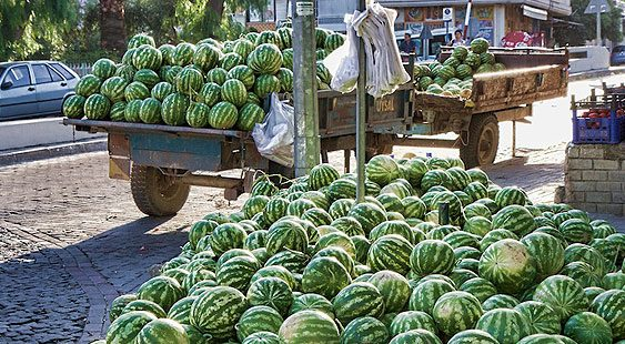 Производителите на лубеници со блокади бараат повисоки откупни цени
