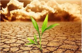 Со пари од ООН Македонија ќе се бори со климатските промени