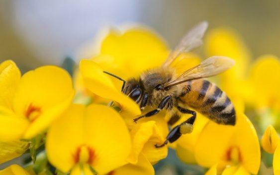 Истражувачите откриле нови 27 пчелни вируси!