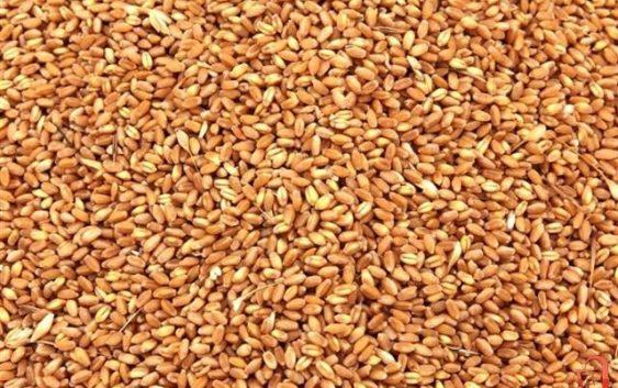 Зголемени цените на пченицата