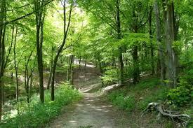 ДЗС: Намалување на шумските производи