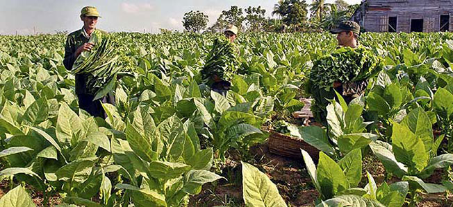 isplateni subvencii za tutun od rekolta 2014