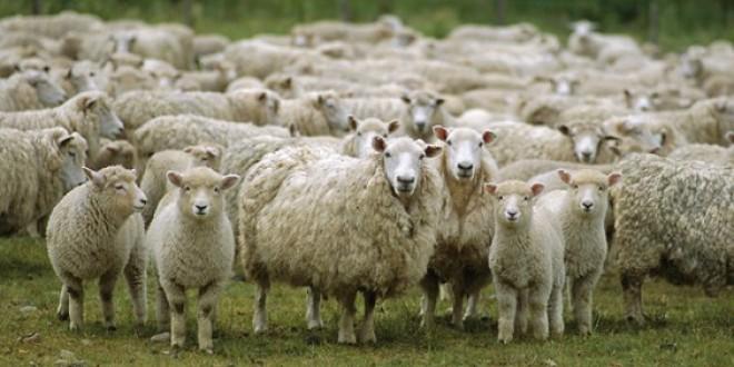 Photo of Наскоро оглас за субвенции за расен добиток