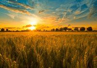Во Битола ставена на увид Предлог-годишната програма за продажба на земјоделско земјиште