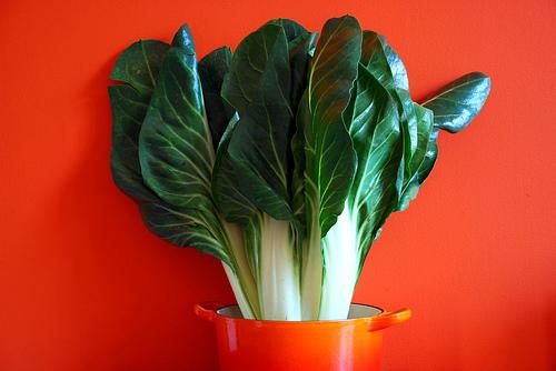 Photo of Блитва – лековито растение