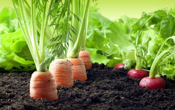 Доаѓа време на е-земјоделие