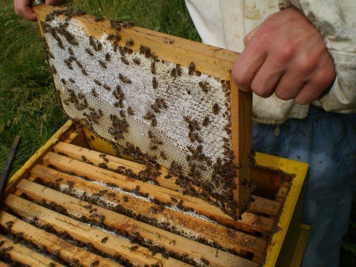 Photo of И пчеларите влегоа во  Националната програма за рурален развој