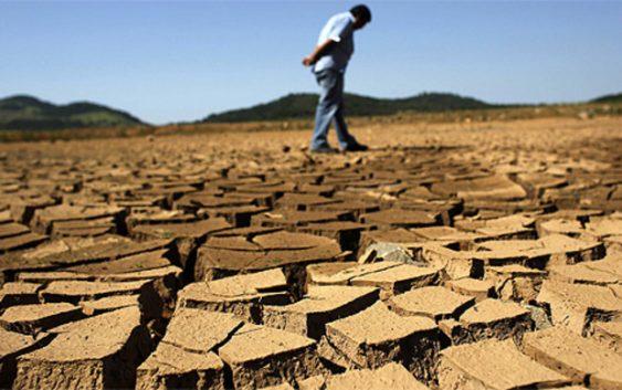 Климатските промени влијаат на аграрот – Први на удар грозјето, пченицата и доматите