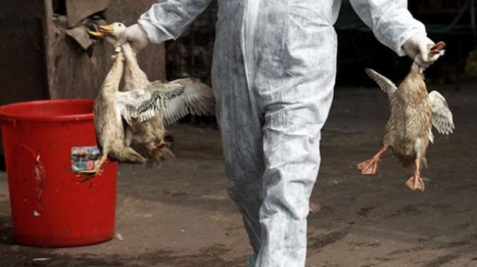 Photo of Македонците јадат двојно помалку пилешко месо од Европејците