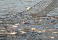 Нови основи за стопанисување со рибите во реките и езерата