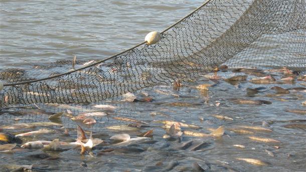 Photo of Нови основи за стопанисување со рибите во реките и езерата