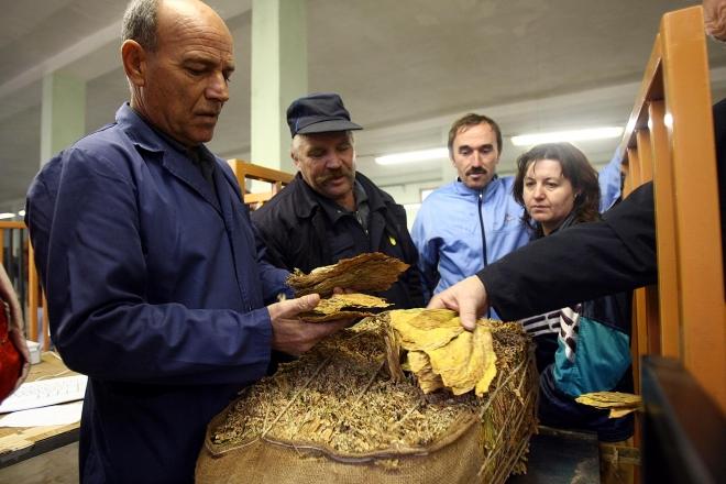 Photo of Почна откупот на тутун во велешко