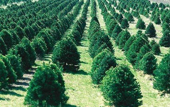 Производи во шумарството, сеча на дрва и услуги