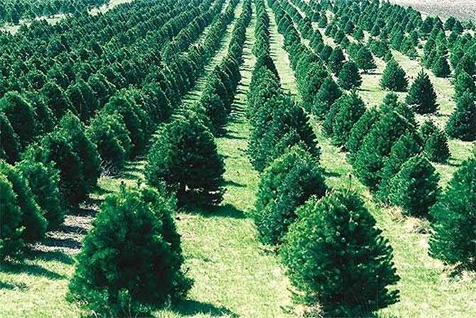 Photo of Производи во шумарството, сеча на дрва и услуги