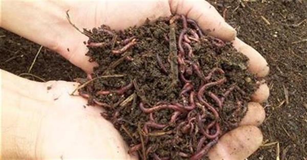 Photo of Се продаваат легла од калифорниски црви