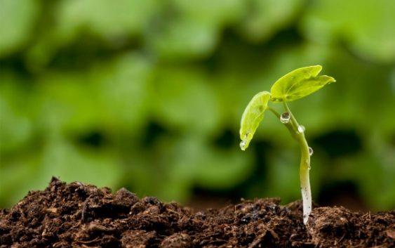 Субвенции за сите фармери што ќе садат по педолошка карта