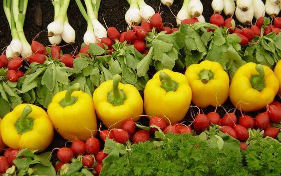Зголемен откуп на градинарски и фуражни култури