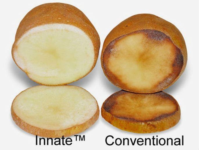 Photo of Се појави ГМО компир: Еве како да го препознаете!