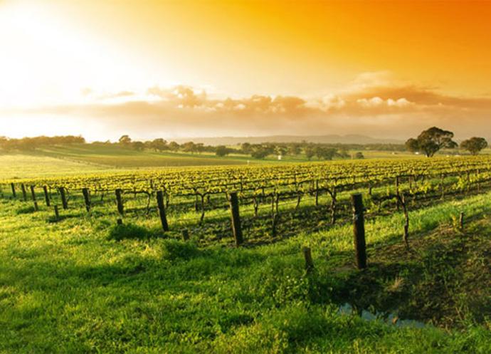 Photo of Вински туризам: Пет дестинации што мора да ги посетат љубителите на вино