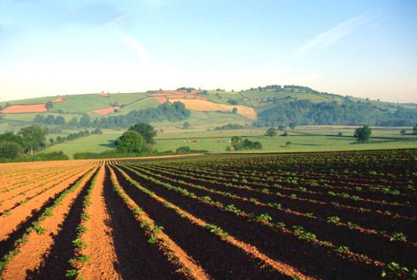Photo of Високите температури без големо негативно влијание врз земјоделството