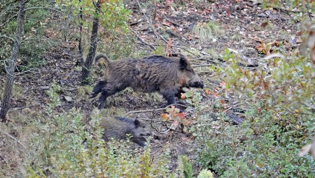 Photo of Богата сезона за кичевските ловџии
