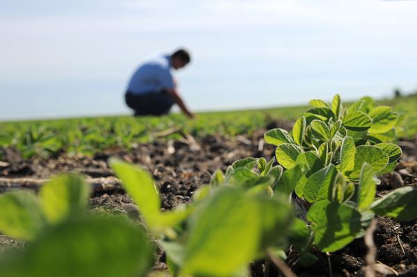 Photo of Кочанските земјоделци најзаинтересирани за растително и сточарско производство