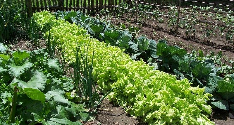 Photo of Нова мерка за субвенционирање на земјоделството