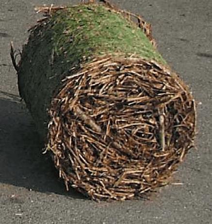 Photo of Прачките од лози, обновлив извор на енергија