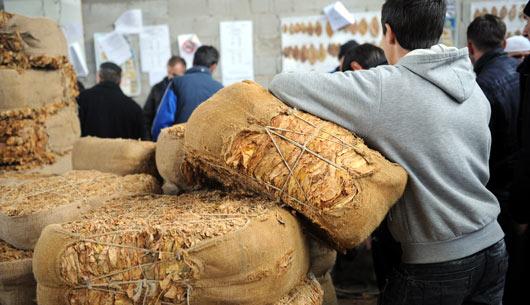Photo of Преполовени откупените количини на тутун во штипско
