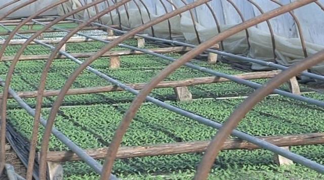 Photo of Продажба на земјоделско земјиште за изградба на расадници