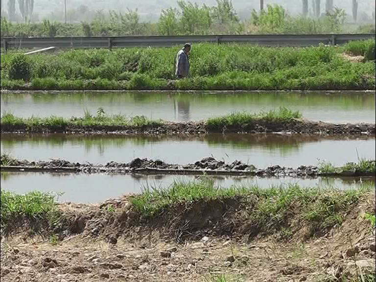 Photo of Co ориз ќе бидат насеани 5.000 хектари