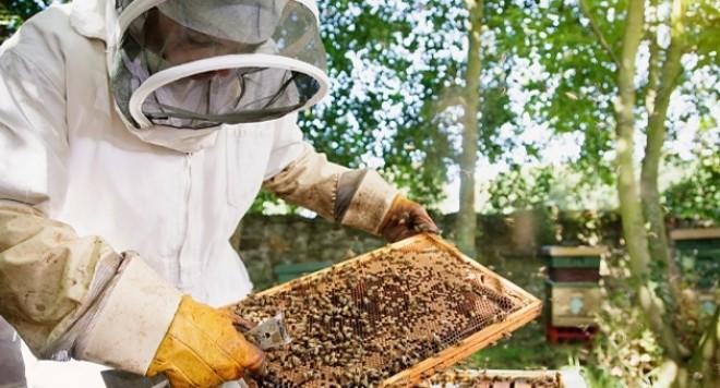 Photo of Субвенции за пчеларство